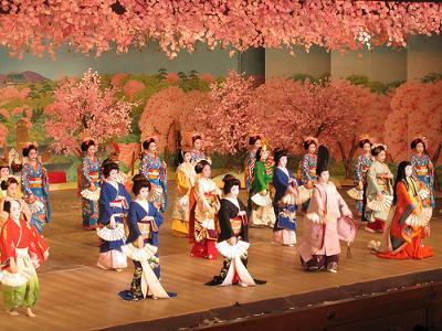 Japanese Cherry Dance in Kyoto