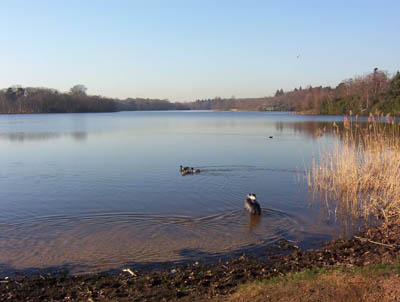 Lake at Virginia Water, Surrey