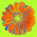 Orange and green pop art daisy picture