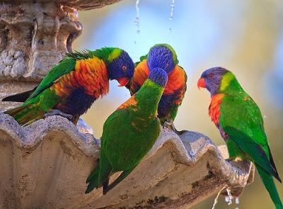 Beautiful Birds In Australia