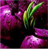 Onions by Alma'ch